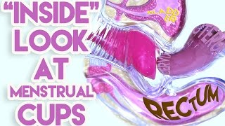 Download An ″Inside″ Look at Menstrual Cups Video