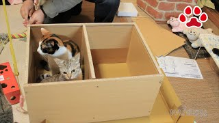 Download DIY 猫用トイレを自作した。I made a cat toilet 【瀬戸の三毛猫日記】 Video