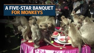 Download Lopburi, a Thai town, organizes monkey banquet Video