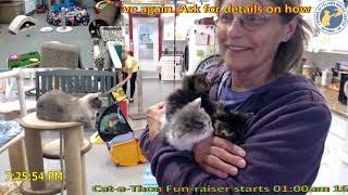 Download Jacci introduces the Double J litter 06/04/2019 Video