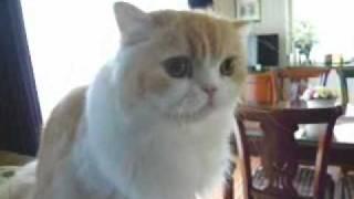 Download しゃべる猫マーヤ Video