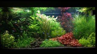 Download Juwel Rio 350 LED aquarium setup Video