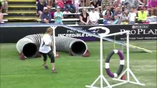 Download Large Dog Agility 1st Place - Incredible Dog Challenge 2015 Huntington Beach, CA Video