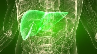 Download Liver Disorders: Cause and Solution Video