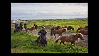Download Eldhestar in Iceland, an adventure in horses and riding Video