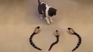 Download Cute is Not Enough - Funny Cats and Dogs Compilation #183 Video