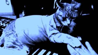 Download Keyboard Cat ″HIND PAW, 1 note DUET″ Video