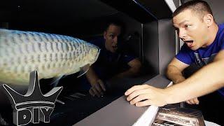 Download I BOUGHT NEW FISH!! - Arowana gets tank mates Video