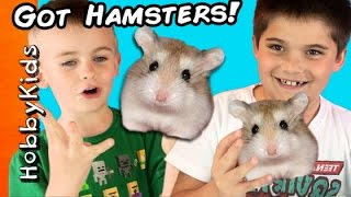 Download HobbyKids Buy REAL Hamsters! Escaped Pets at Home + Petco Toy Shopping Haul HobbyKidsTV Video