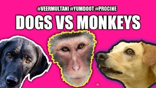 Download wow 2 million views #Monkey VS #dogs or dogs vs #monkeys (usa canada, south africa) 🐵🐕pls share🐶 Video