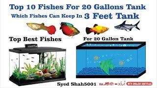 Download Top 10 Fish for a 20-Gallon Aquarium #How Many Fish for a 20-Gallon Tank? Video