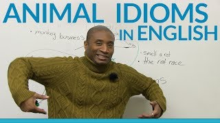 Download Animal idioms and expressions in English Video