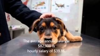 Download Thinking about becoming a veterinarian Video
