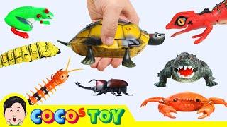Download 한국어ㅣ징글징글 R/C 장난감 모여라! 어린이 동물 만화, 곤충이름ㅣ꼬꼬스토이 Video