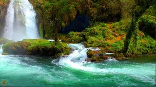 Download 8 Hour Nature Sound Relaxation Soothing Forest Birds, Relaxing Sleep Sounds Without Music, Waterfall Video