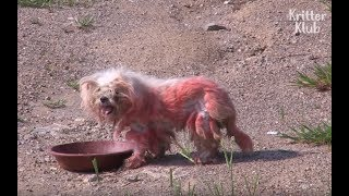 Download Abandoned Red Dog Waits For Owner To Come Back | Animal In Crisis EP23 Video