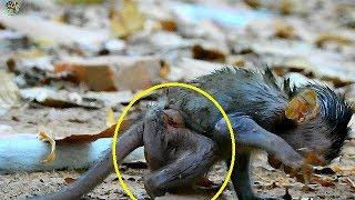 Download P:11 Pity Newborn Janet walk very slowly &hurt | Poor newborn Janet start walk first 3 day ago | Video