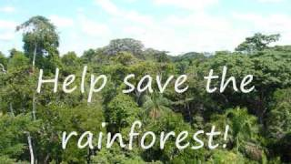 Download Rainforests: Important and Threatened Video