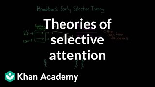 Download Theories of selective attention | Processing the Environment | MCAT | Khan Academy Video