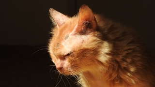 Download Abandoned at 17 - new beginning for an elderly cat Video