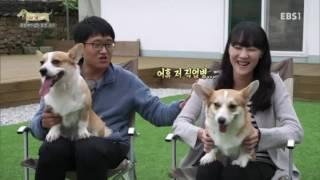 Download 세상에 나쁜 개는 없다 - 첫 생리부터 출산까지, 반려견의 性 #001 Video