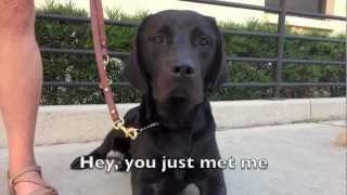 Download Trust Me Baby - Guide Dog Parody of ″Call Me Maybe″ Video