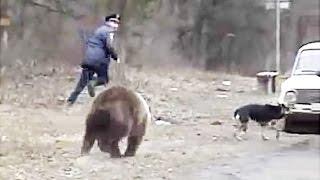Download Insane BEAR Encounter Compilation || Failtastic 2016 Video