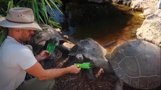 Download LARGEST BACKYARD REPTILE TOUR!!! Video