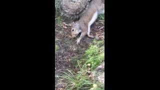 Download Squirrel gets stoned on mushrooms Video