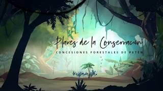 Download Pilares de conservación. Concesiones forestales de Petén, Guatemala Video