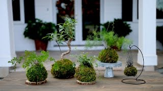 Download How to Make Kokedama (Full Version) // Garden Answer Video