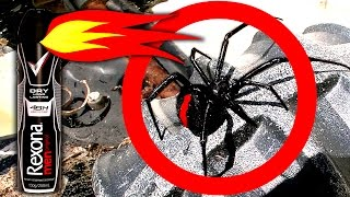 Download Redback Black Widow Spiders On Childrens Tonka Truck Toys Spider Infestation Scary Video Video