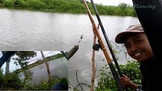 Download Mancing Ikan Belanak Dapat Banyak - Teknik Nggarong 2 Mata Kail Video