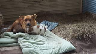 Download 保護母犬テレサと子犬フランとシスコ Video