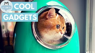 Download 10 Useful Gadgets For Cats Video