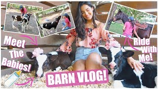 Download Meet Our New Bottle Calves! | ″BUSY″ Barn Vlog! Video