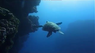 Download Ocean (Be a predator) Documentary HD Video