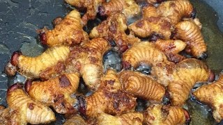 Download Cooking and Eating Sago Grubs (Butod) Video