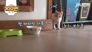 Download 엄마 고양이의 공방주인 몰래 쓰는 육아일기 Video