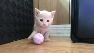 Download I am Back! Meet the 4 Week Old Ginger Kittens! Video
