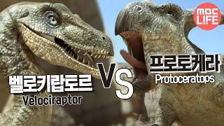 Download Velociraptor VS Protoceratops - The Land of Dinosaurs, #07, 벨로키랍토르 VS 프로토케라 Video