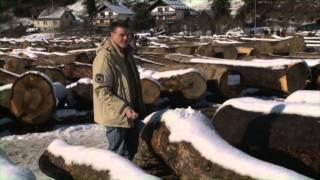 Download Licitacija hlodovine Slovenj Gradec 2012 ( Z Golico na vas ) Video