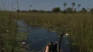 Download Delta Camp, Okavango Delta, Botswana Video