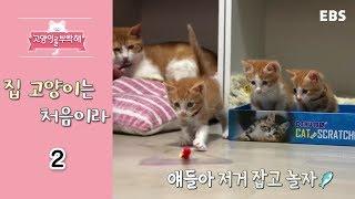 Download 고양이를 부탁해 - 집 고양이는 처음이라 #002 Video