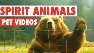 Download Hilarious Spirit Animals Video Compilation Video