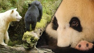 Download Most Inspiring Animal Family Moments | Top 5 | BBC Earth Video