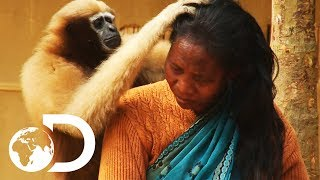 Download Adorable Ape Shares A Fascinating Relationship With Humans   Wild India Video