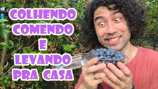 Download MIRTILO GARI (BLUEBERRY) - Japão Nosso De Cada Dia Video