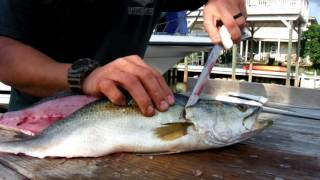 Download How to clean a speckled trout Video