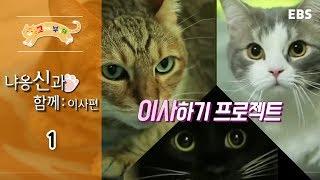 Download 고양이를 부탁해 - 냐옹 신과 함께 : 이사편 #001 Video